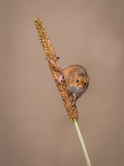 Friendly (Chris Willis 10) Tags: bird animal nature small wildlife sparrow closeup yellow beak cute fluffy feather oneanimal brown branch younganimal harvestmouse looking pets