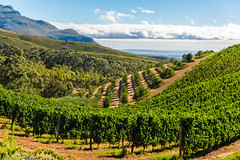 South_Arica_2018_82 (s4rgon) Tags: gardenroute southafrica stellenbosch südafrika wine winefarm winery