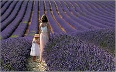 Between the Lavender. (rogilde - roberto la forgia) Tags: lavanda tenerezza luci light tenderness free libertà need air percepire campi fields france francia provenza provence lavander lavender