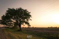Always be there by your side (Mariano Colombotto) Tags: lules tucuman argentina tree arbol landscape paisaje nature naturaleza nikon sunset atardecer tones colours ngc field campo