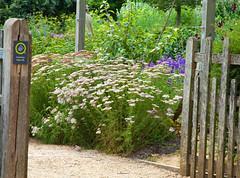 Standen NT Sussex (Adam Swaine) Tags: standen nationaltrust sussex eastsussex gardens sussexgardens flora flowers summer england english seasons canon counties beautiful britain british uk ukcounties