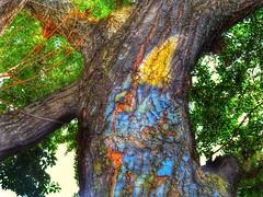 El pájaro sobre el árbol (FOTOS PARA PASAR EL RATO) Tags: cortezas textura méxico chapala cuervo arbol graffiti