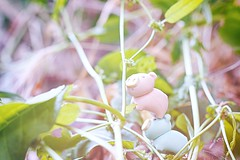 166/365 : Climbing (♥GreenTea♥) Tags: pig eraser pigeraser pigs erasers pigerasers bluepig pinkpig blue pink iwako iwakoeraser iwakoerasers イワコー t1i canon canont1i canont1irebel canonrebel eos canoneosrebelt1i ef100mmf28macrousm canonef100mmf28macro hdr googlenikcollection nikcollection colorefexpro viveza hdrefexpro 365 photoaday pictureaday project365 365toyproject oneobject oneobject365daysproject 365the2018edition 3652018 day166365 365day166 day166 project365166 15june18 project36506152018 06152018 odc ourdailychallenge odcnaturephotography ourdailychallengenaturephotography naturephotography