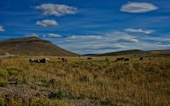Patagonia (georgina e.s) Tags: patagonia argentina rionegro ingenierojacobacci maquinchao