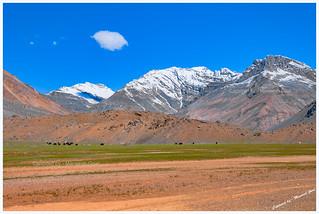 Pastures en route Losar