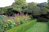 Cloud Hedge (Dragonsilk) Tags: walmercastle hedges