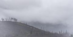 Foggy Spring morning at Grand Teton (Alex&HisNikon) Tags: grandteton nationalpark wyoming usa