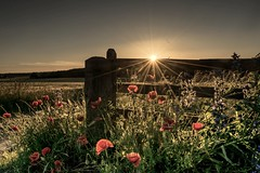 Happy fence friday☺️xx (shona.2) Tags: scotland eastlothian northberwick goldenhour sunset sunburst sunshine field flowers poppies fencefriday hff