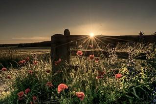 Happy fence friday☺️xx