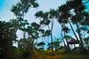 Giant mangroves (rushdee3000) Tags: landscape nikon tokina