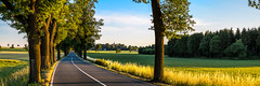 Allee - Thuringia, Germany (dejott1708) Tags: allee road panorama landscape street alley trees sunset