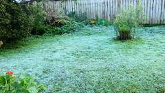 Massey, West Auckland, New Zealand (Sandy Austin) Tags: panasoniclumixdmcfz70 sandyaustin massey westauckland auckland northisland newzealand frost winter mygarden