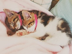 Dottie and Bella (Rich J Photo) Tags: dottie bella burryport cat pet kitten fluffly cute whiskers meow sleep cuddle love samsung