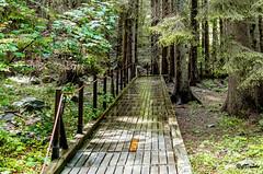 Pioggia e sole sul sentiero (danilocolombo69) Tags: abeterosso ponte trekking appennino pioggia sole foschia danilocolombo69 danilocolombo nikonclubit legno faggio