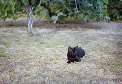 Nero (Tpstearns) Tags: cat film gw690 120 mediumformat portra400 fuji