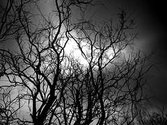BIANCO e NERO (cannuccia) Tags: cieli nuvole bianconero bw alberi rami temporale vesuvio campania virgiliocompany