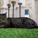 Cat at the Carmo Convent