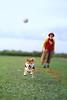 柴ジャンプ (yymario2018) Tags: dog sky park grass mitakon a6500 japnesedog shibainu