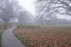 Victoria Park..... (flying-leap) Tags: newzealand northcanterbury nz southisland the4seasons nature weather 4winter winter leaves trees rangiora fog park bandrotunda sony sonydscrx10m4 sonydscrx10iv sonyrx10iv victoriaparkrangiora moody atmosphere foggy