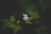 Gloom (Dominik Dilger) Tags: plant flower forest dark nature canon outdoor hiking wald wandern 50mm bokeh blackforest gutachschlucht dominik dilger double d blume pflanze