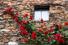 Sobral de São Miguel (António José Rocha) Tags: aldeia casa janela roseira pedra rosas cores vermelho sobraldesãomiguel aldeiaflorida aldeiasdoxisto beleza covilhã