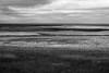 De Schorren - Texel 2017 (Wilma v H- thanks 4 U'r lovely comments/faves!) Tags: deschorren deschorrentexel waddeneilanden waddenzee goldenhour monochrome blackandwhite lightsandshadows marshes kwelders texel oosttexel noordholland northholland islands canoneos60d luminositymasks tkactionsv6panel 2017 nederland netherlands skies outdoors clouds