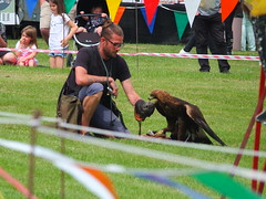 Golden Eagle rewarded with a titbit DSCF3681 (SierPinskiA) Tags: ruffordabbeycountrypark rufford knightsofnottingham fujixs1 jousting medieval horse knights goldeneagle falcon