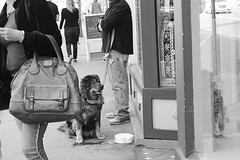 Patience jpg (hutchphotography2020) Tags: dog waiting storefront streetdog street nikon