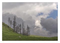 Cluster I. (Anscheinend) Tags: cluster baumgruppe art artistic fineart stilllife stilleben trees bäume alpen alps alpi alpes mountains clouds storm