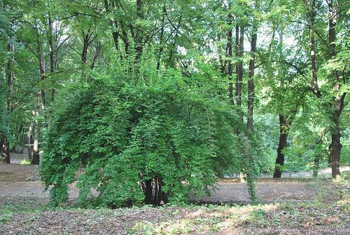 Аскольдова могила, Київ  InterNetri Ukraine 014