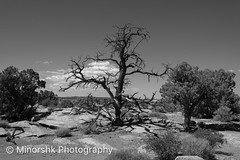 untitled-9720.jpg (minorshk) Tags: bigfive canyonlandsnationalpark nationalparks southwest usa utah desert moab unitedstates us