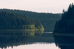 Talsperre Eibenstock, Saxony, Germany (Nils Leonhardt) Tags: landscape nature water forest tree lake nikon nikond810 nikkorlens gitzo reflection rural naturallight sachsen erzgebirge deutschland landscapephotography nilsleonhardt