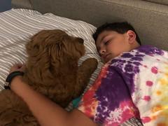 Ginger's sweet boy Finn!