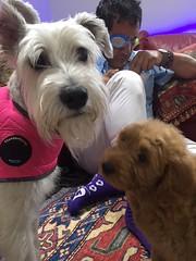 Ginger's Olga meeting her new fur sister!