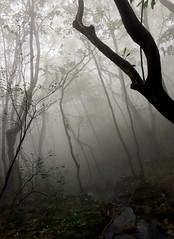 Mountain Forest (cowyeow) Tags: hongkong forest mist spooky china chinese asia asian atmosphere trees nature composition taimoshan mountain habitat