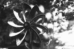Pinwheel (Retro Photo International) Tags: spinner pinwheel yard wind jupiter 11 m42 bw summer 7dwf