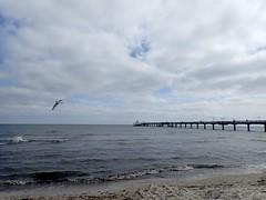 Abflug (marion streich) Tags: binz seebrücke ostsee lachmöwe schiff