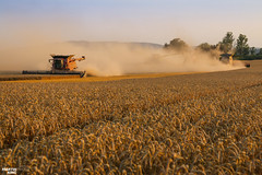 CTF Wheat Harvest 2018 (martin_king.photo) Tags: harvest harvest2018 ernte 2018harvestseason ctfharvest controllentrafficfarming ctf wheat grain combineharvester combine harvester new modernmachine summerwork powerfull martin king photo machines strong agricultural great czechrepublic agriculturalmachinery farm working modernagriculture landwirtschaft martinkingphoto moisson machine machinery field huge big sky agriculture power dynastyphotography lukaskralphotocz day fans work place yellow gold golden eos country lens rural camera outdoors outdoor caseih macdonheader macdon macdonindustries goldenhour colours landscape fields lines axialflow controlledtrafficfarming