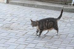 Cat at the stable (gill4kleuren - 16 ml views) Tags: pussy puss poes chat mieze katje gato gata gatto cat pet animal kitty kat pussycat poezen