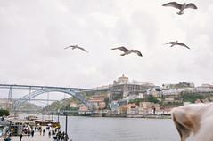 Ice the Dog watching seagulls in Ribeira (Gail at Large | Image Legacy) Tags: 2018 portugal ribeira gailatlargecom