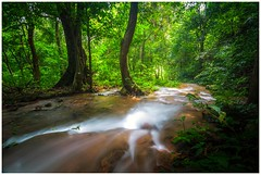 Old Forest (=Heo Ngốc=) Tags: waterfall jungle trees sunlight leaf green coloful longexposure vietnam nationalpark nature landscape beautiful water nobody