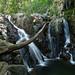 Rose-River-Hike
