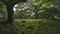 Trip to Wales (mark his view) Tags: sonya7 wales cymru snowdonia landscape seascape lighthouse tree porthmadog wern manor snowdon