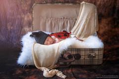 Welcome home (antoniopedroni photo) Tags: newborn valigia baggage baby babies babygirl ladybug