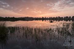 Dwingelderveld (aNNajé) Tags: dwingelderveld ochtend zonsopkomst zon zonsopgang licht water ven