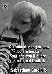 #animali #cane #frase #link #page #facebook #Tiziana #Mosso #aforismi #citazioni (tizianamosso) Tags: mosso tiziana cane citazioni animali link frase aforismi page facebook