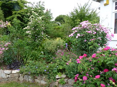 P1170302 (jrcollman) Tags: collepardo cornus gardens places plants geranium thalictrum rplant gplant clematis rose cplant