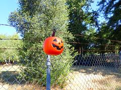 2018_0623_002 (seannarae) Tags: 2010s 2018 ca capture date location month states tg5 year dayofweek fence jackolantern june objects pumpkin road roads saturday westsideroad