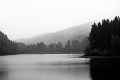 Still ruht der See (Gruenewiese86) Tags: harz tour canon6d canon 6d schwarz black blackandwhite monochrome forest monochrom rain regen fog nebel wald himmel baum holz landschaft berg gras feld