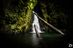 Salto do Cagarrao ©DeschampsDamien (deschdam6@gmail.com) Tags: waterfall landscape nature açores azores lush vegetation forest jungle water trees river flow green colors earth wild outdoor travel mothernature freedom photography adventure trail hiking explore